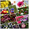 100% Perennial Wild Flower Seed Mix Annual Meadow Plants Attracts Bees & Butterfly (100g=100000+) Pure Wildflower Seeds Mix #1
