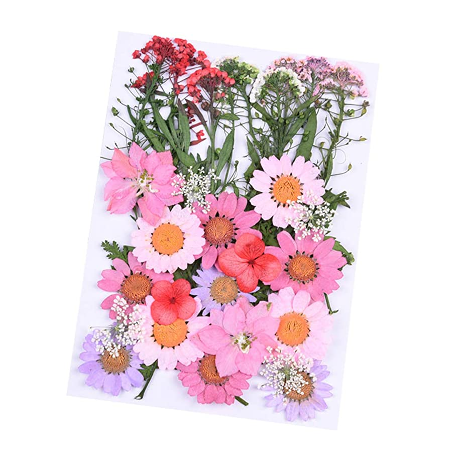 KIKISUM Pressed Herbarium Flower Natural Dried Daisy for DIY Crafts Jewelry Making Decorative (Mix-C)