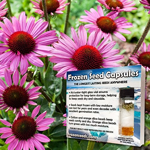 Magnus Echinacea Seeds (Echinacea purpurea) 25+ Medicinal Flower Seeds + FREE Bonus 6 Variety Seed Pack - a $29.95 Value! Packed in FROZEN SEED CAPSULES for Growing Seeds Now or Saving Seeds for Years