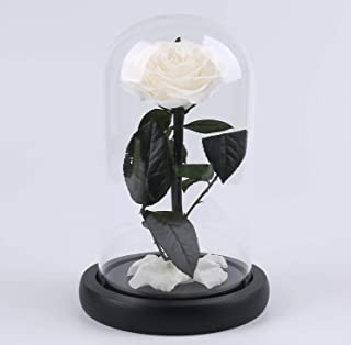 "The ultimate ""Beauty and the Beast"" keepsake,Forever Flowers,Preserved Real Fresh Rose in Glass Dome Cover with Gift Box f..."
