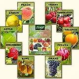 ZLKING 550 Stück Mix Obst Bonsai Samen 2017 Beliebte Bio-Obst und Wassermelone Staudenpflanzensamen Home Garten Bepflanzung