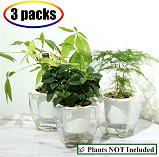 Self Watering Planter , FENGZHITAO African Violet Pots, Clear Plastic Automatic-Watering Planter Flower Pot Square Plant Pot for All House Plants, Succulents, Herb, African Violets (3 Packs Small)