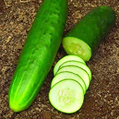 Fantastic addition to your home garden! Direct sowing is recommended, but to get a head start you can grow cucumbers indoors 3-4 weeks before the last frost in individual biodegradable pots indoors. ... Sow seeds ½ inches deep in seed-starting formul...