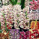 EgBert 200PCS jard/ín Bonsai Flor Mono Cara orqu/ídeas Semillas Plantas de m/últiples variedades de Interior 4
