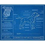 American Pit Bull Terrier Blueprint 3
