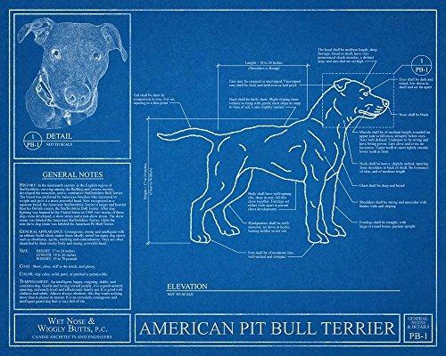 American Pit Bull Terrier Blueprint 1