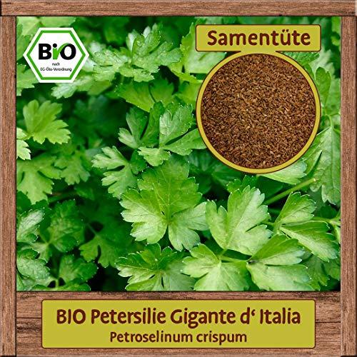 Samenliebe BIO Kräuter Samen Petersilie Gigante d'Italia (Petroselinum crispum) | BIO Petersiliesamen Kräutersamen | Samenfestes BIO Saatgut für 2,5m²