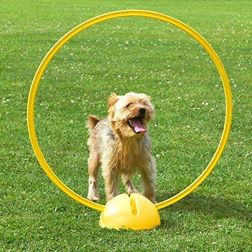 Superhund24 4 x Kombi-X-Fuß mit Kombi-Ring 70 cm, in 4 Farben, für Agility-Training (gelb)