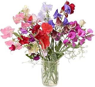 David's Garden Seeds Flower Sweet Pea Royal Mix SL1319 (Multi) 50 Non-GMO, Heirloom Seeds