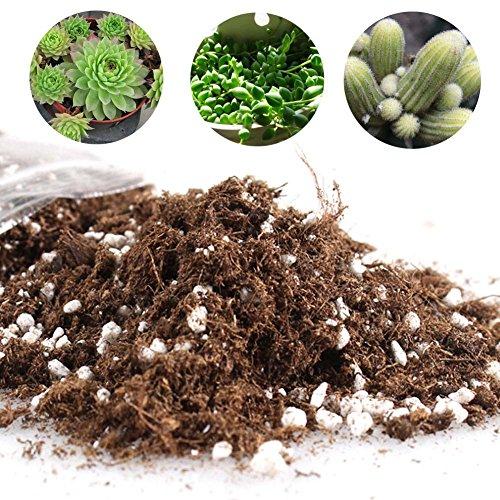 DK-tre Einfache Kakteen Sukkulenten-Erde Mischung – Haus Garten Blumenerde Anzucht Erde Kakteen – wassersparende Kokoserde H01