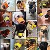 TFENG La museruola per Cani, Morbida previene la fuoriuscita di Cibo, Evita l'auto leccamento, Non abbaiano, l'arancio Giallo Rosa Nero, l'S-XXL #2
