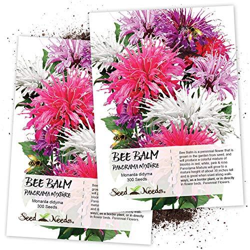 Seed Needs, Bee Balm Panorama Mixture (Monarda didyma) Twin Pack of 300 Seeds Each