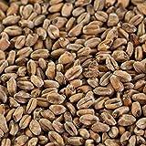 1 kg de malta de trigo oscuro para cervezas oscuras EBC 14-18