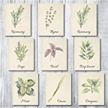 Botanical Prints Wall Decor - Kitchen Art Herbs Leaves Set UNFRAMED Pictures 9 PIECES Nature Floral herb Plant Flower Green Small Botanical Prints Wall Art Vintage Print Poster (Vintage, 8x10)