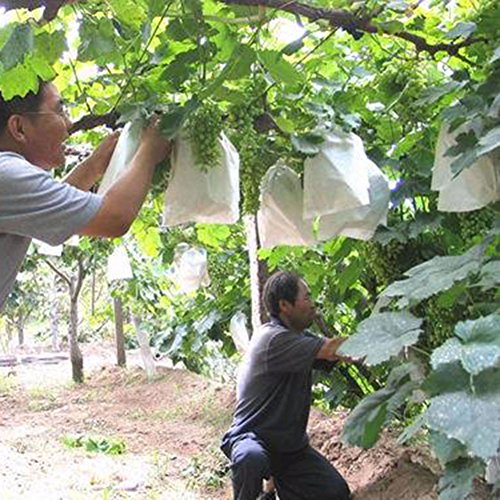 100 Unids Uvas de Jardín Bolsa de Protección de Frutas para Fruta...