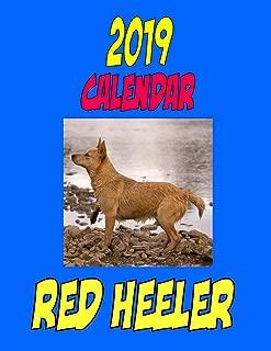 Best red heeler calendar 2019 Reviews