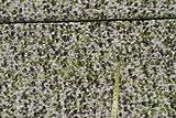 alles-meine.de GmbH 0,5 m * 1,4 m Stoff Filz - gefilzt -