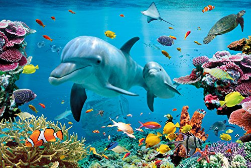 GB eye LTD, Tropical Underwater, Ocean, Maxi Poster, 61 x 91,5 cm