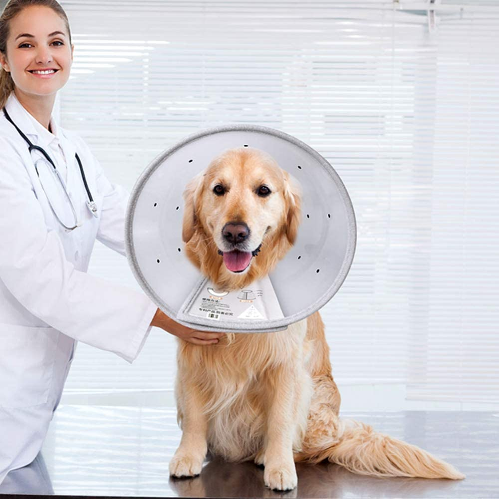 A surprise price is realized KITAINE Pet Recovery Dog Cones Surgery store Cat After Adjustabl