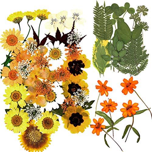BANBAN Juego de 67 flores secas prensadas secas y prensadas, flores secas prensadas, juego de flores prensadas mezcladas de pétalos secos para manualidades, joyas, decoración de uñas