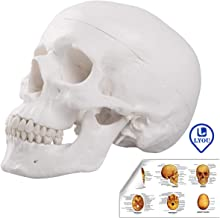 Best dog skull anatomy Reviews