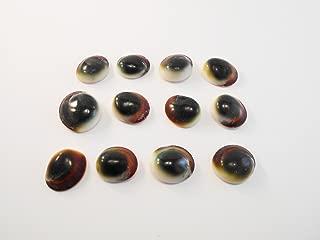 "1/"" Beach Crafts /""Shiva Shells/"" 3 Red Cat Eye Shells Seashells Operculum 1//2/"""