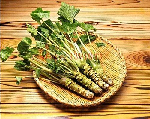 Ttmart 200 pcs Wasabi japonais de graines, radis Noir Graines de légumes Graines