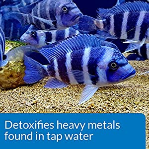 API TAP WATER CONDITIONER Aquarium Water Conditioner 16-Ounce Bottle, White (52C)
