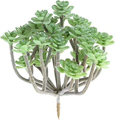 36 cm Europalms 82505661 Epiphyllum Bush