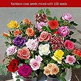 Kurphy 100PCS / Set Rainbow Rare Multi Color Rose Flores Semillas Home Garden Decor Plantas Semillas Hermosa Flor de balcón perenne