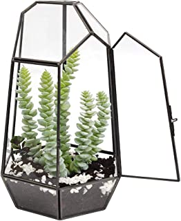 The Fellie Glass Terrarium, 9.8