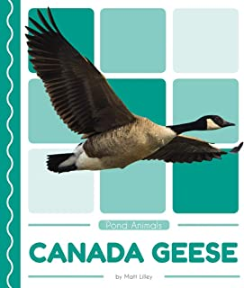 Canada Geese (Pond Animals)