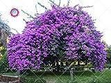 Semillas 40pcs Lila árbol de la flor de Jardines aromáticos de plantas ornamentales plantas para el jardín de DIY bonsai Inicio