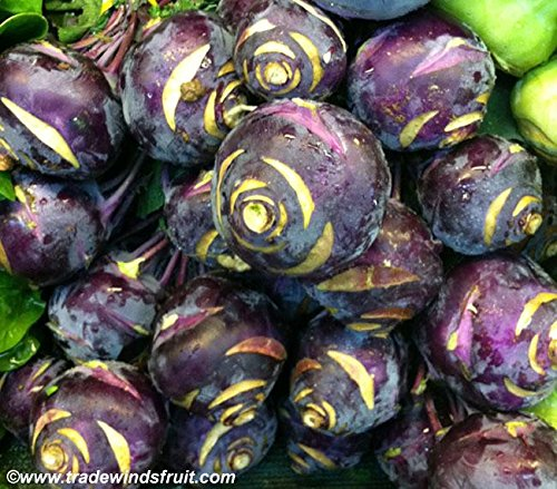 Purple Kohlrabi Micro Green Seeds (Brassica oleracea var. gongylodes) 20+ Rare Seeds + FREE Bonus 6 Variety Seed Pack - a $29.95 Value! In FROZEN SEED CAPSULES for Growing Seeds Now or Saving Seeds