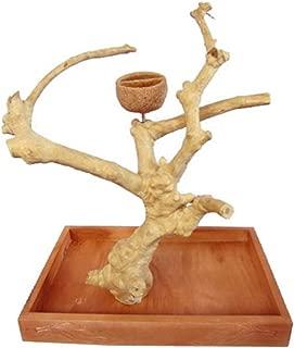manzanita tree parrot