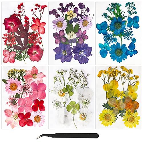 Fleurs Pressées Séchées Fleurs séchées Naturelles Fleurs Sechees à Ongles Multicolores pour resine epoxy Bougie Bricolage Scrapbooking