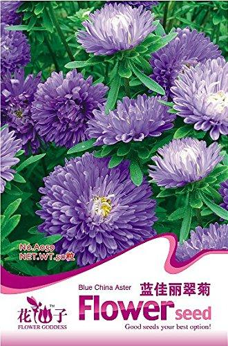 1 Original Pack, 50 graines / paquet, Callistephus chinensis Chine Aster Duchess Blue Ice annuel Seeds # A059