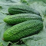 TOPmountain Semi di Cetriolo,deliziosi Semi di ortaggi per la piantagione di Piante da Giardino,Facili da Coltivare
