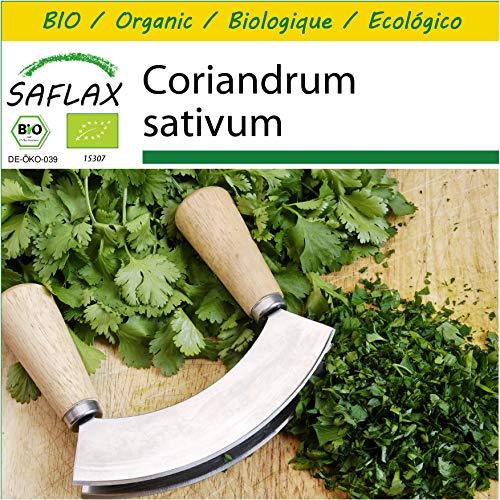 SAFLAX - Kit de culture - BIO - Coriandre - 150 graines - Avec mini-serre, substrat de culture et 2 pots - Coriandrum sativum
