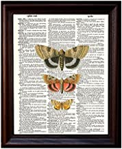 Three Moths Entomology Display - Printed on Recycled Vintage Dictionary Paper - 8