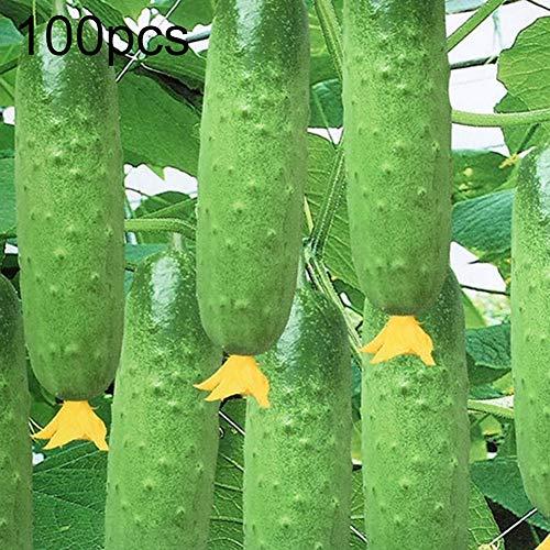 Graines de concombre, 100 graines de concombre décapage des légumes, des fruits, de la maison, du jardin, de la cour, des plantes Graines de concombre