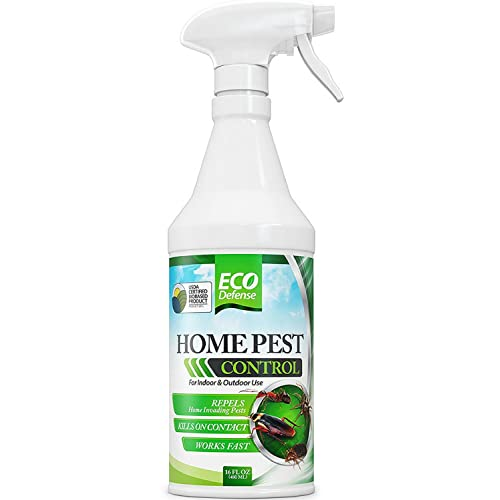 Fruit Fly Spray: Amazon com