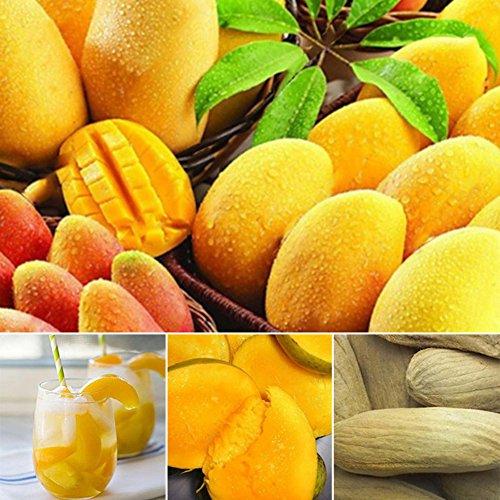 Zhouba Mango-Samen für Hof, Gartenpflanze, 2 Stück/Pack, Mini-Mangobaum, seltene Samen, Obst, Pflanzen, Bonsai, Home Garden Decor