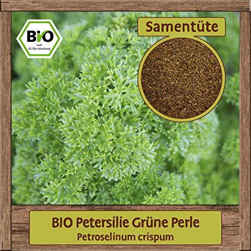 BIO Petersilie Samen Sorte Grüne Perle (Petroselinum crispum) Kräutersamen Krause Schnittpetersilie