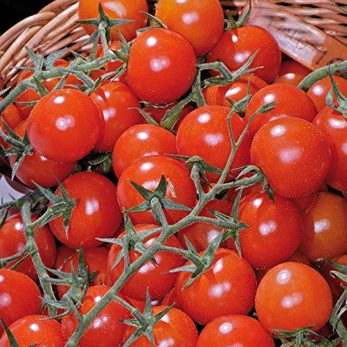 Tomaten (Kirschtomaten), 'Philovita' F1