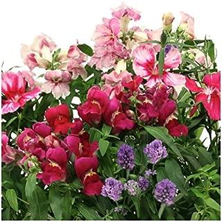 Best cottage flower seeds Reviews