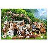 JoyMountain Peak Dog Puzzles for Adults 1000 Piece - Doggie Photoshoot in a Dog Park - Premium Quality 1000 Piece Puzzles for Adults, HD Image with Non Glare Finish, No Puzzle Residue