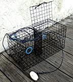 Best Crab Traps - Maryland Blue crab pot trap, pvc coated wire Review