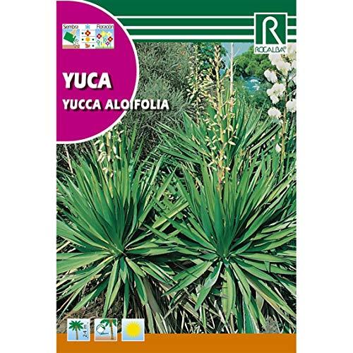 Semillas de Yuca Yuccca aloifolia