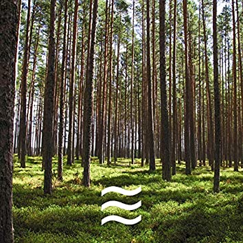 Calming Forest Nature Soughs